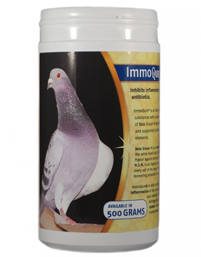 ImmoQure Pigeon